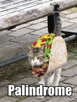 TACOCAT is a palindrome!
