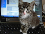 Couldn't think of a suitable image, so here is a kitten on a computer.
